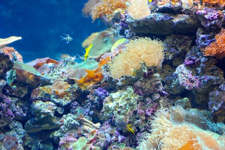Colourful coral reef deep underwater