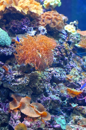 Colourful coral reef deep underwater Stock Photo - 12020014