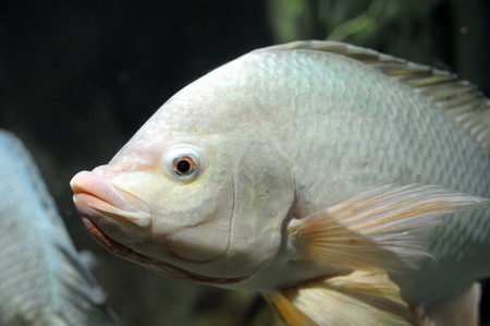 Fish in the deep water Stock Photo - 12084212