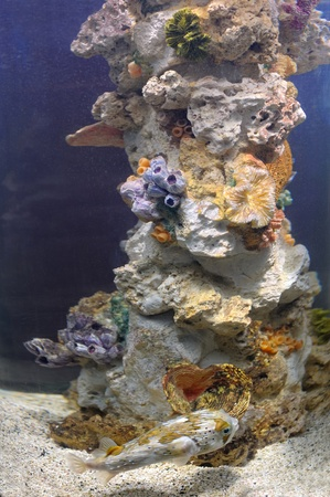Colourful coral reef deep underwater photo