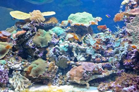 arrecife: Coloridos arrecifes de coral bajo el agua profunda Foto de archivo