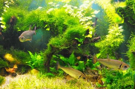 ecosistema: Peces bajo el agua en las algas Foto de archivo