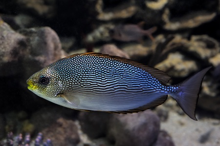 Fish in the deep water Stock Photo - 12332644