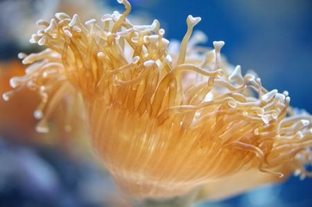 Sea actinia in colourful underwater
