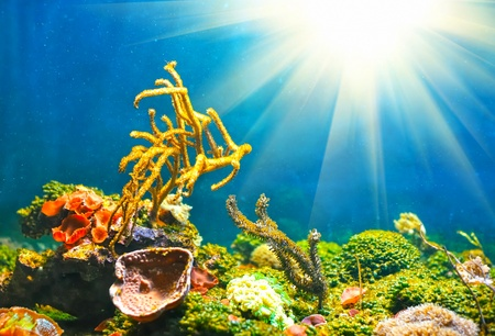 Colorful sunny underwater world