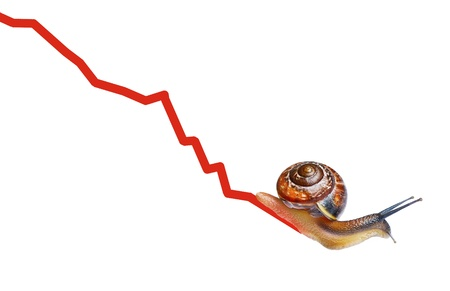 Snail on chart currency isolated on white photo