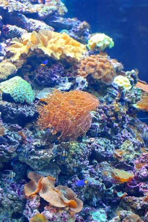 hard coral: Colourful coral reef deep underwater