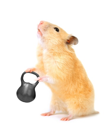 Hamster con bar aislado en blanco