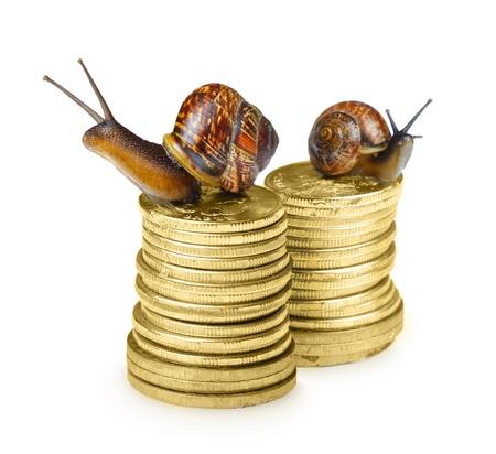 deposit slip: Snail on coins isolated on white