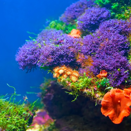Colorful underwater flora