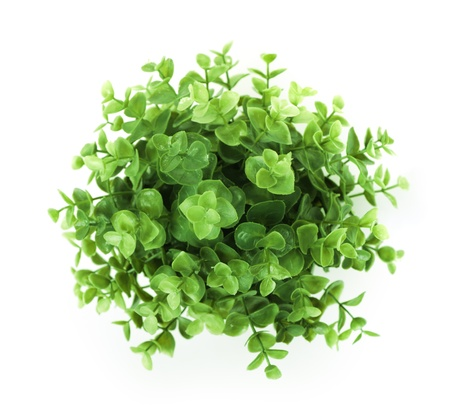Home plant isolated on white background
