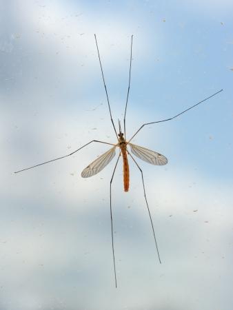 taint: Mosquito bug on window