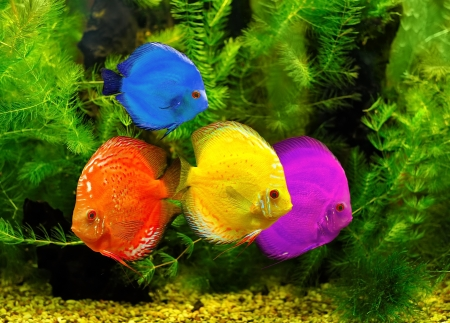 Fishes in different color in water Stock Photo - 17902619