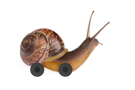 Speedy snail on wheels isolated on white background photo