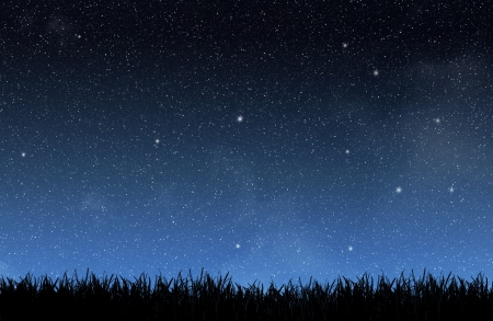 noche estrellada: Hierba bajo el cielo de la noche