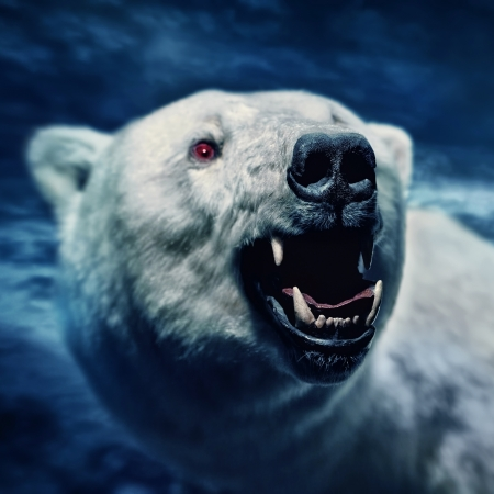 Angry white polar bear with sharp teeth photo