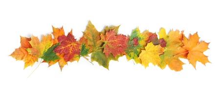 Autumn leaves ge Stockfoto