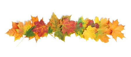 Autumn leaves isolated on white background Banque d'images