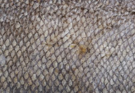 escamas de peces: Escalas de peces de fondo Foto de archivo