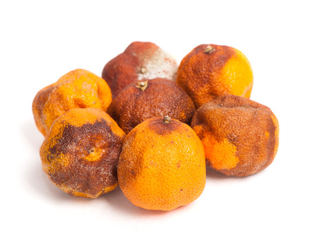 chemical peels: Group of rotten oranges isolated on white background