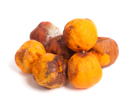 spoilage: Group of rotten oranges isolated on white background