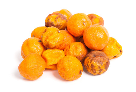wastage: Group of rotten oranges isolated on white background
