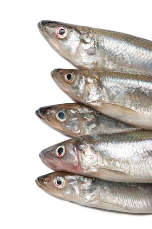 fishery products: Smelt fishes isolated on white background