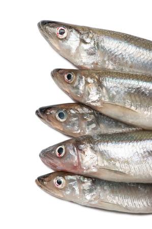 smelt: Smelt fishes isolated on white background