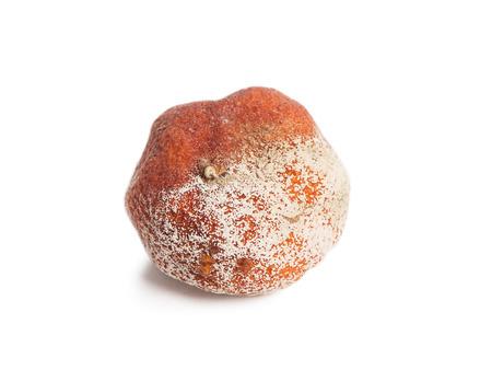 mildewed: Rotten orange isolated on white background