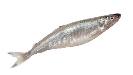 smelt: Smelt fish isolated on white background