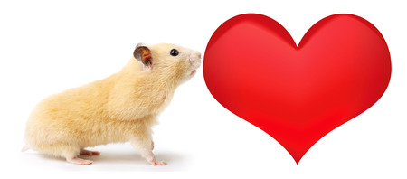 Hamster with heart isolated on white background