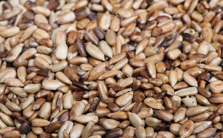 sodden: Overcooked peeled sunflower seeds background