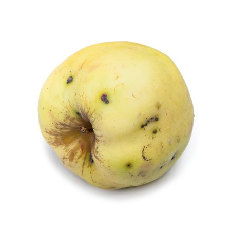 Old rotten apple on white isolated background, unhealthy to eat