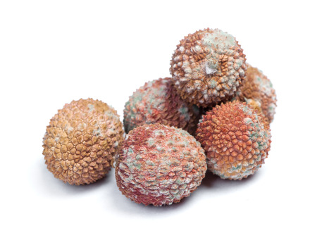 Group of rotten lychees fruits isolated close up on white background