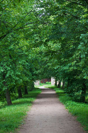 Alley of green trees at the park