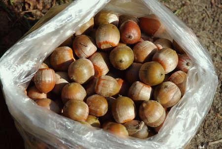 acorns: bag of acorns