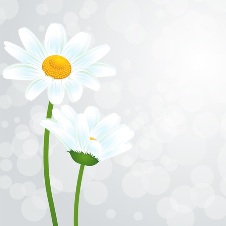 camomile flower: illustration Nature background with camomile flower