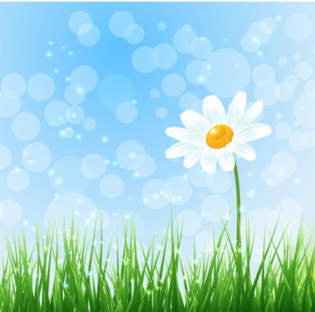 chamomile flower: illustration Nature background with chamomile flower