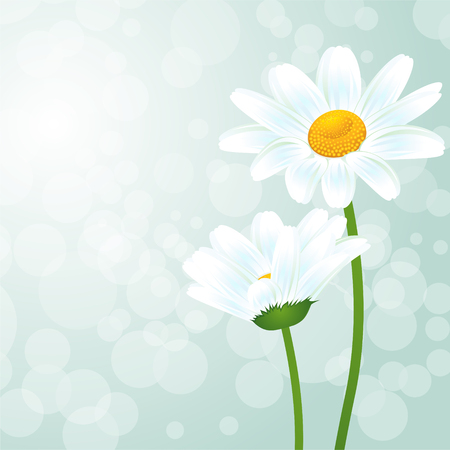 Illustration Nature de fond avec des fleurs de camomille Banque d'images - 47833675