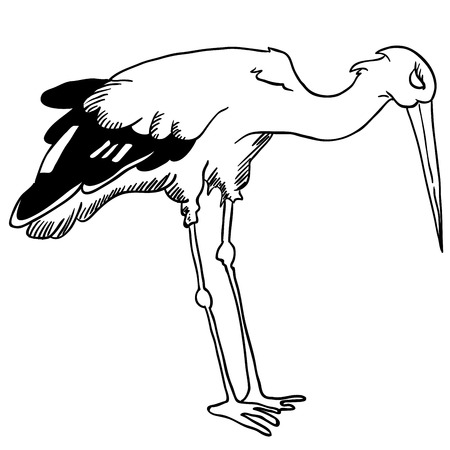 fable: black and white stork illustration Illustration