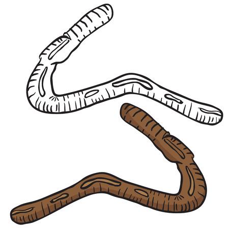 wigglers: lobworm drawing