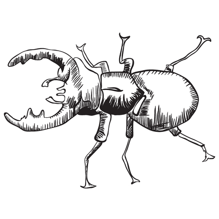 bettle: stag beetle black and white  illustration Illustration