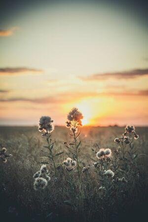 Wildflowers and sunset 스톡 콘텐츠