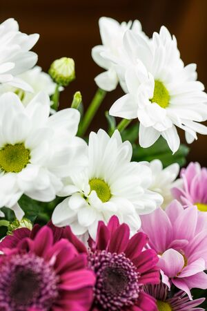 Beautiful chrysanthemums of different colors, white, red and pink in a bouquet are very close for a gift or holiday decoration Stock fotó