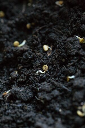 The seeds of different vegetables lie on the ground for planting in spring Banque d'images