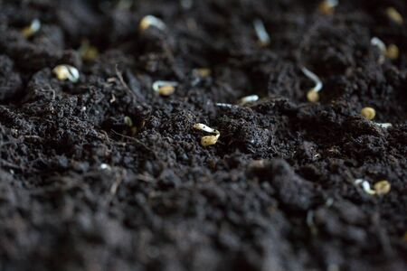 The seeds of different vegetables lie on the ground for planting in spring