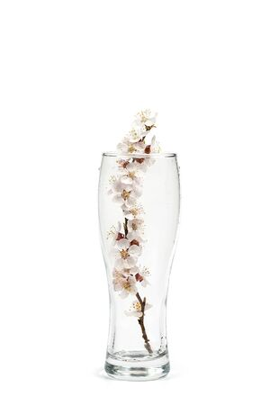 Flowering branch with flowers in a beer glass on a white background