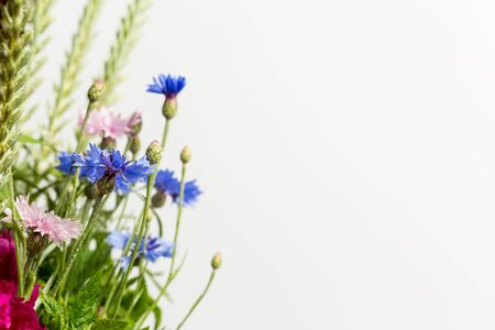 Beautiful wildflowers on a white background, close