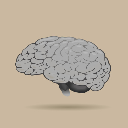 two minds: the human brain