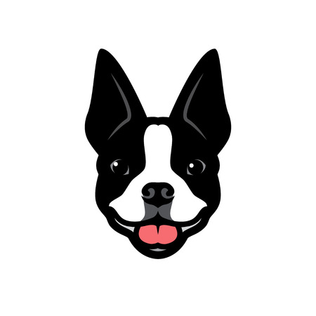 Boston terrier dog - vector illustration
